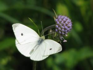 Best Photo of Butterfly